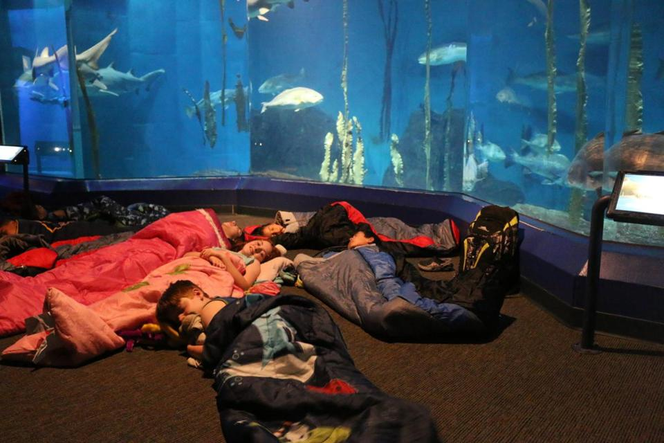 The giant tank makes for a soothing background for sleepovers at the Maritime Aquarium in Norwalk.